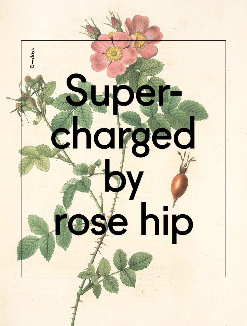 D-Rose_hip_web